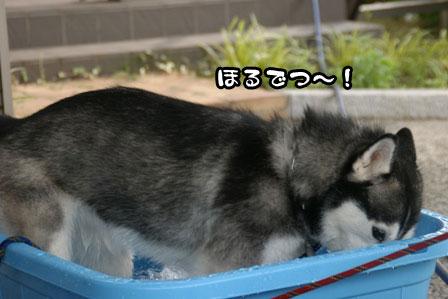 4_20110704210749.jpg