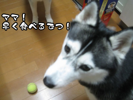 4_20110727201936.jpg