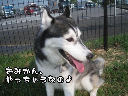 4_20110801193311.jpg