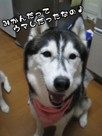 4_20110819213241.jpg