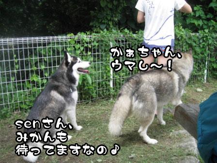 4_20110829214628.jpg