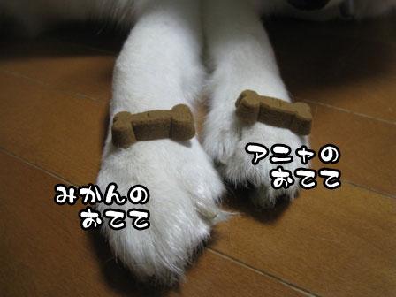 4_20110901203412.jpg