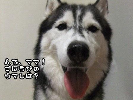 4_20110910201716.jpg