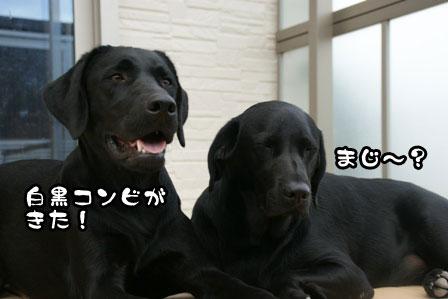4_20110930202932.jpg