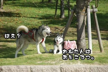 4_20111002200049.jpg