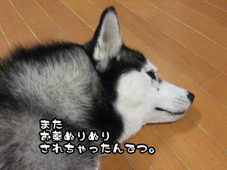 4_20111014215523.jpg