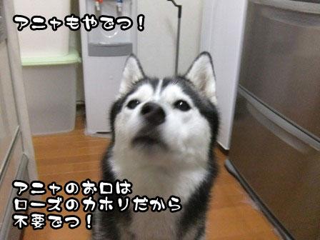4_20111019211747.jpg