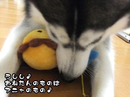 4_20111021212303.jpg