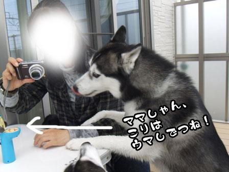 4_20111103215503.jpg