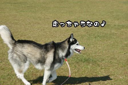 4_20111117214924.jpg