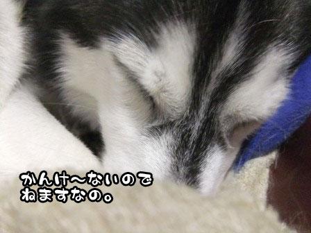 4_20111126220827.jpg