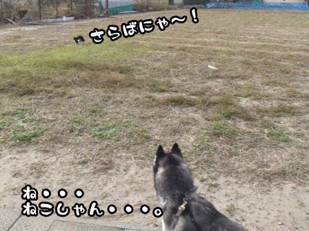 4_20111127203849.jpg
