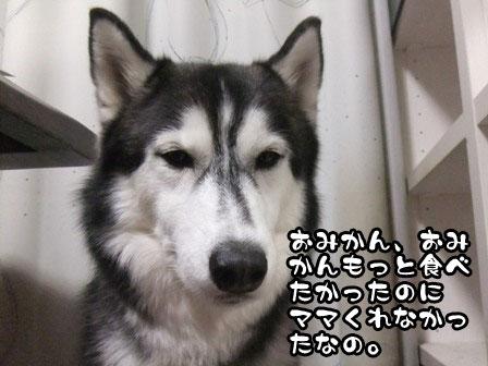 4_20111128212721.jpg