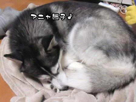4_20111201211121.jpg