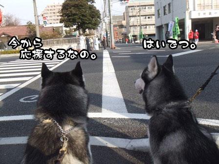 4_20120105193312.jpg