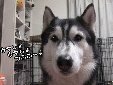 4_20120109214238.jpg