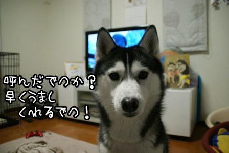 4_20120120211543.jpg