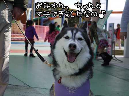4_20120305220005.jpg