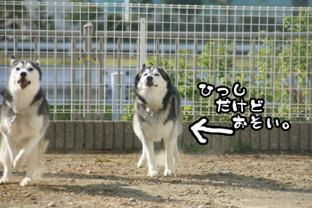 52_20111015221755.jpg