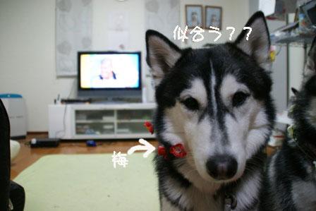5_20100303205424.jpg
