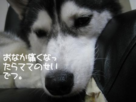 5_20101024201936.jpg