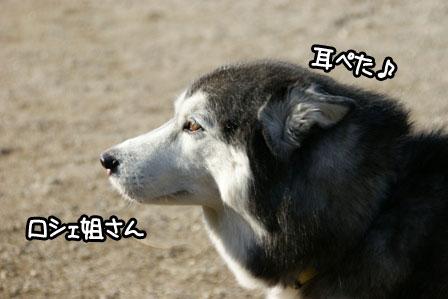 5_20110110205743.jpg