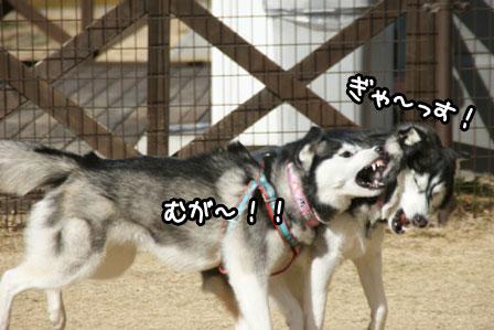 5_20110125185222.jpg