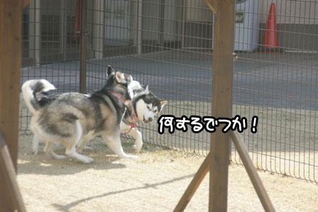 5_20110201193149.jpg