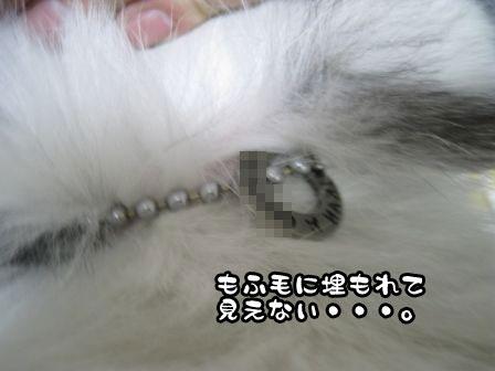 5_20110422204127.jpg