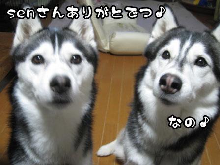 5_20110515213943.jpg