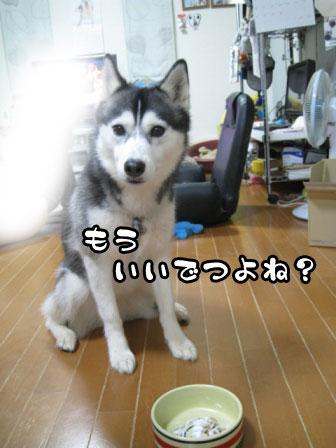 5_20110611211334.jpg