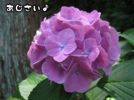 5_20110625215326.jpg