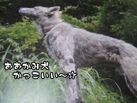 5_20110729191638.jpg