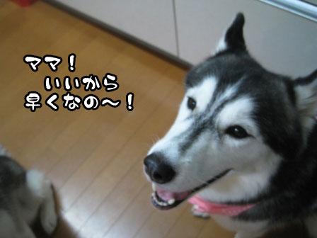 5_20110823213859.jpg