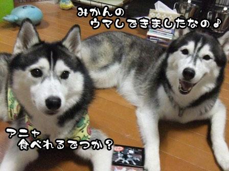 5_20110917202410.jpg
