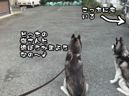 5_20110919201525.jpg