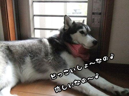 5_20110922195143.jpg