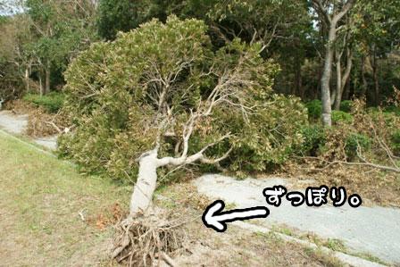 5_20111004210607.jpg