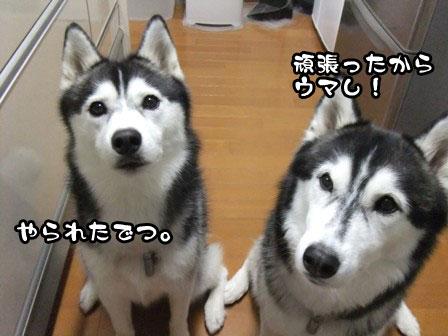 5_20111019211754.jpg