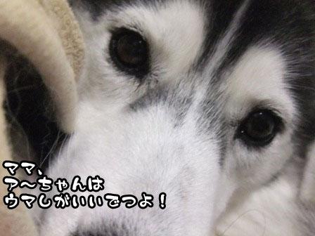 5_20111126220838.jpg
