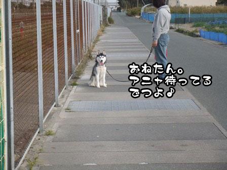 5_20111127203854.jpg