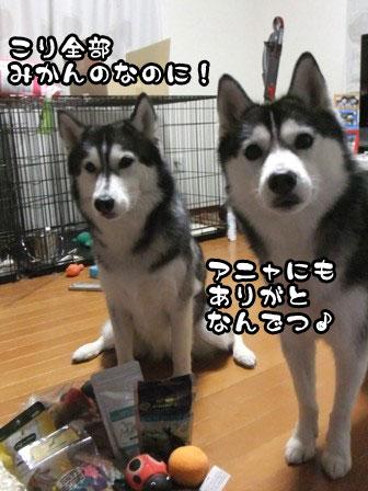 5_20111205214252.jpg