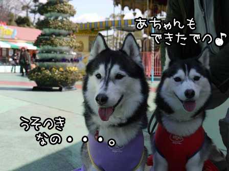 5_20120305220012.jpg