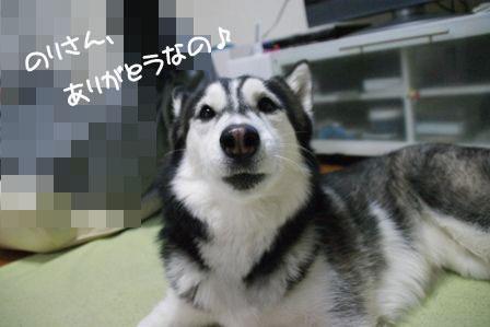 6_20100325213158.jpg