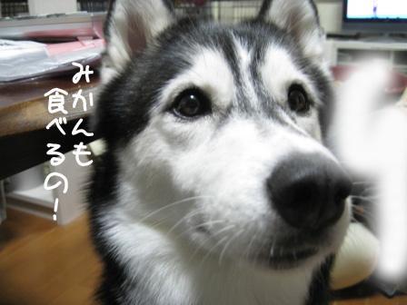 6_20101030235133.jpg