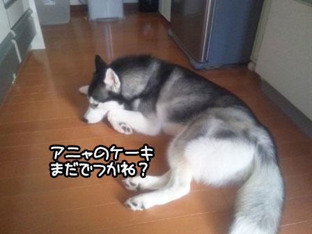 6_20110110221501.jpg