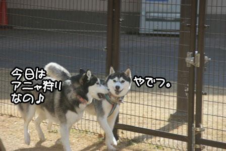 6_20110201193157.jpg