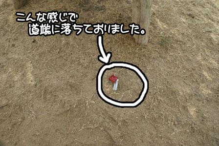 6_20110203205041.jpg