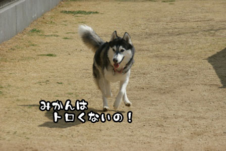 6_20110301203457.jpg