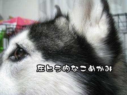 6_20110302204637.jpg